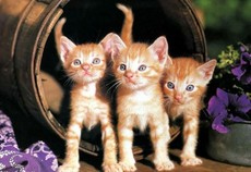 kittens in a barrel
