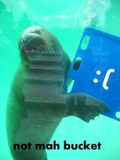walrus with blue thing - not his bucket
