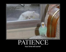 patience your time will come cat wants to eat bird