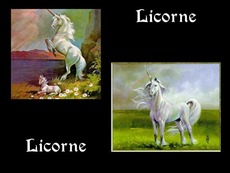 unicorns licorne