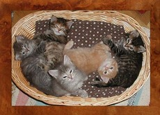 5 kittens in a basket