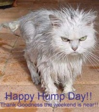 happy hump day cat