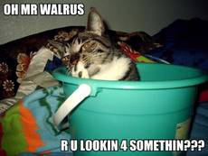 oh mr walrus are you looing for something?