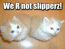 we are not slippers