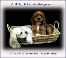 a little hello can always add a touch of sunishine to your day