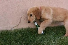 dog with beer bottle