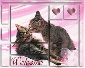 welcome cats