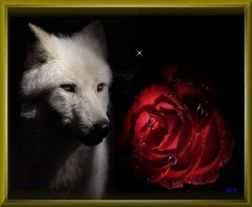 rose with wolf