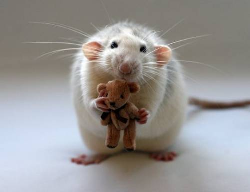 mouse with a bear