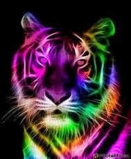 The Colorful Tiger