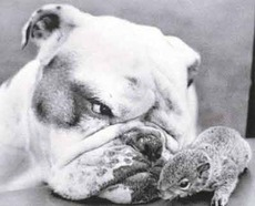 Dog and chipmunk