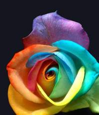 colorful flower