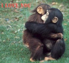 i love you monkies