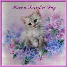 have a perfect day