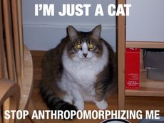 i'm just a cat stop anthropomorphizing me
