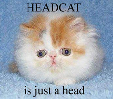 headcat is just a head