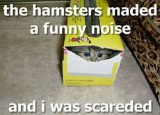 the hamster made a funny noise i was scared