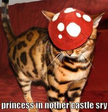 princess is in another castle sorry