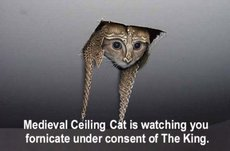 medieval ceiling cat is watching you fornicate under consent of the king