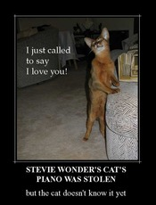 i just called to say i love you stevie wonder's cat's piano was stolen but the cat doesn't know it y