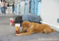 dog with soft drinks