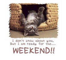 cat - ready for the weekend