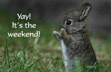 yay it's the weekend bunny rabbit