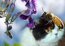 cat bee flowers